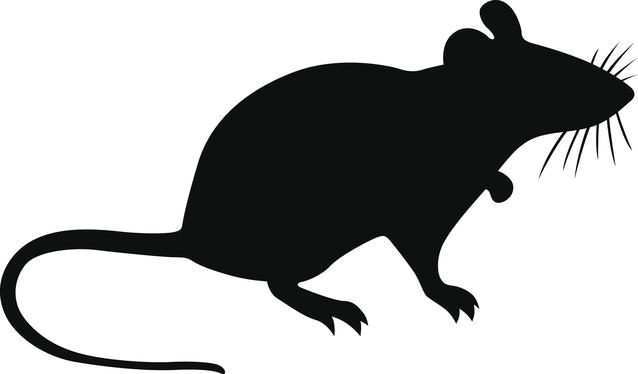 Mouse in shadow